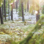 Winter day in lichen rich pine forests, near Vangaži, Vidzeme, Latvia Ⓒ Davis Ulands | davisulands.com Latvia, Latvija, Pinus sylvestris, Scots pine, Vidzeme, daba, flare, forest, green, landscape, landscape photography, mežs, nature, plants, priede, snow, tree, winter, wood
